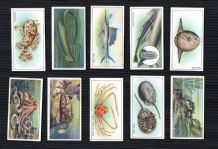 Collectible cigarette cards set Wonders of the Sea 1929